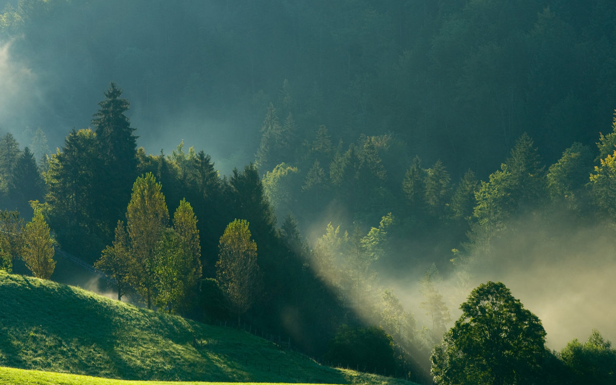 Релакс, картинка тумана в природе