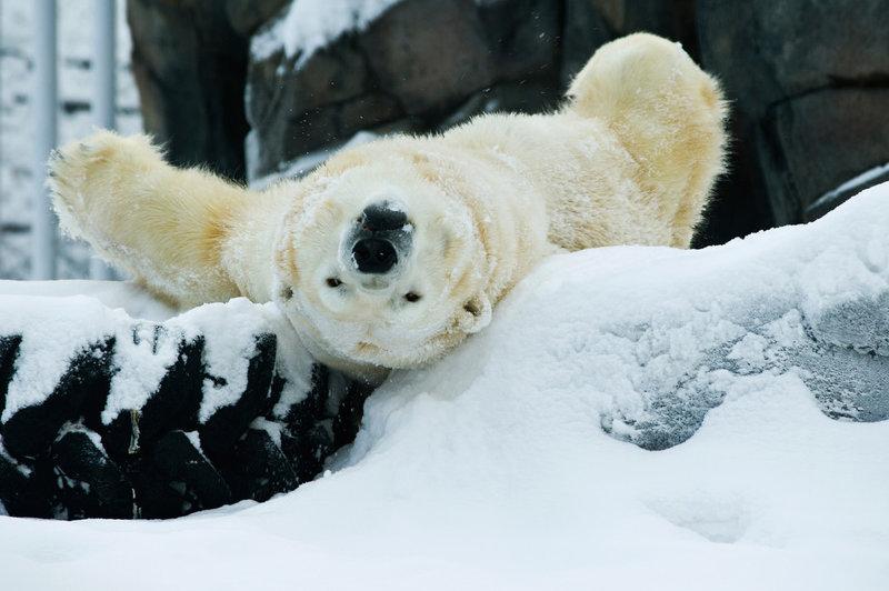 Аляскин зоопарк