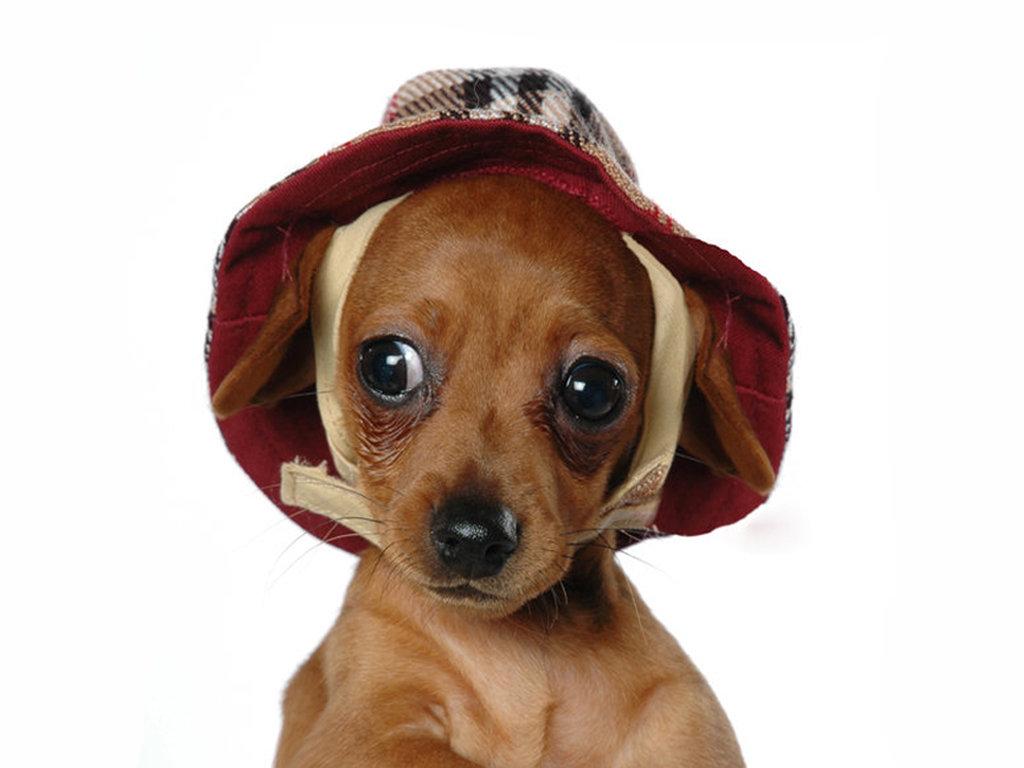 Картинки маленькие собаки прикольные, картинки сережки
