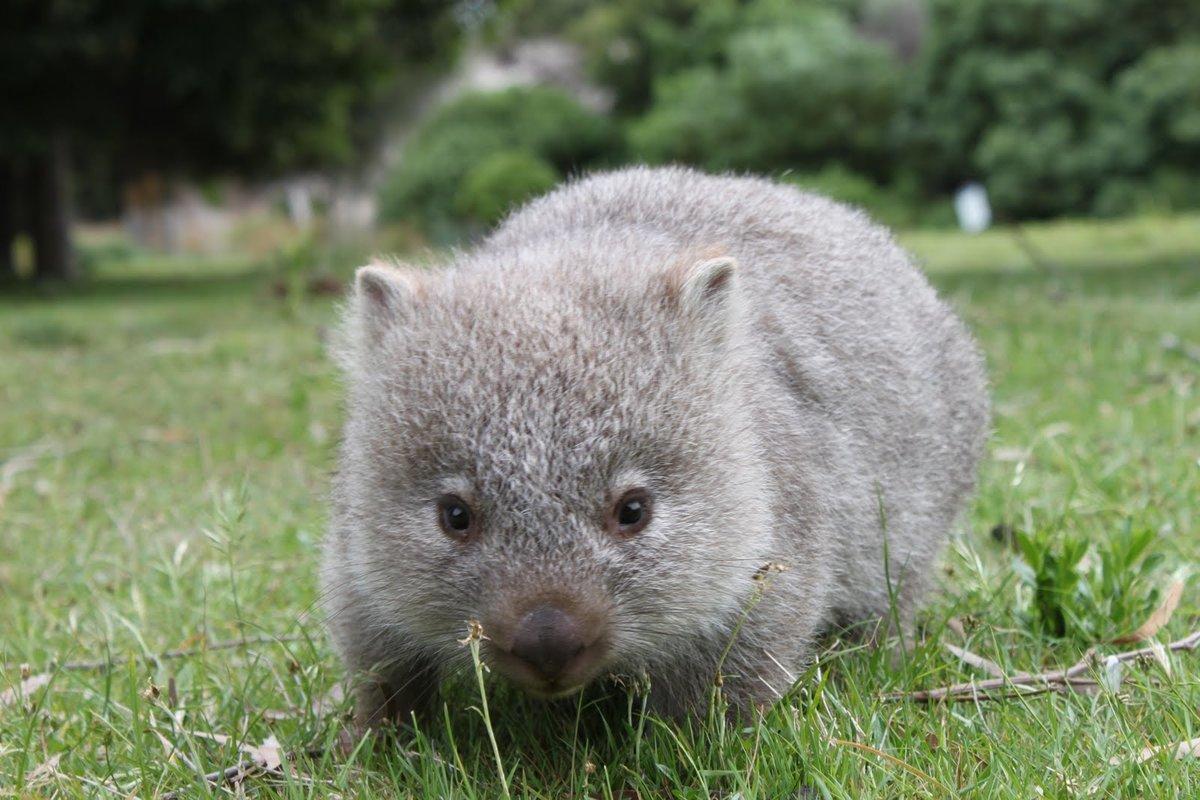 австралийские сумчатые животные фото и названия том, что ночью
