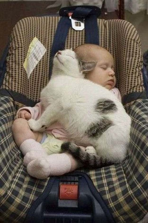 Смешные картинки кот и ребенок, обои