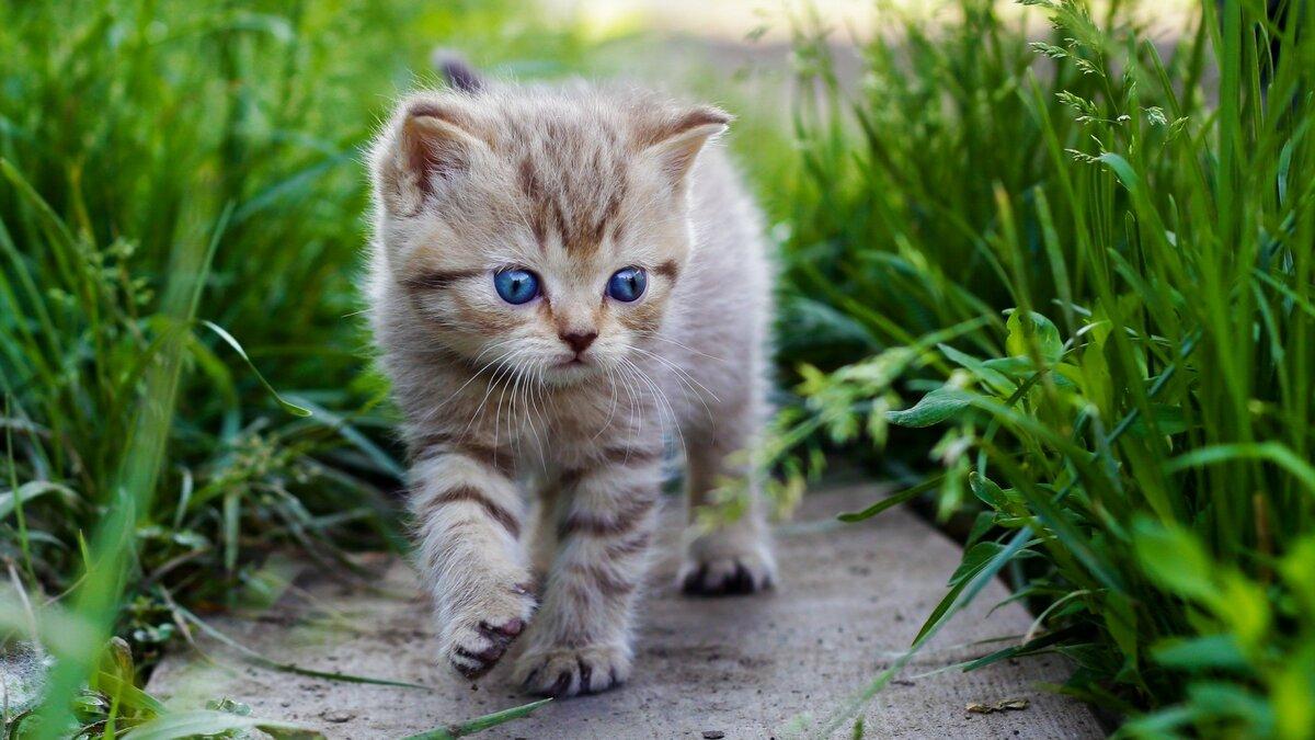 Картинки котят фото