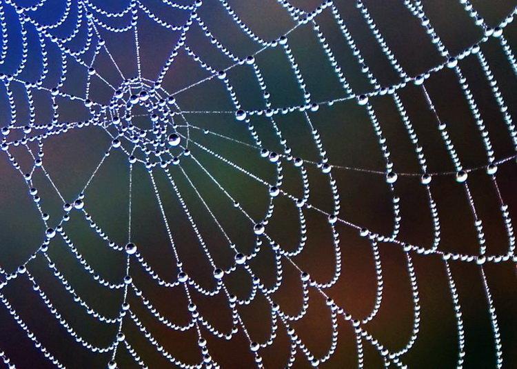 Картинка с паутиной