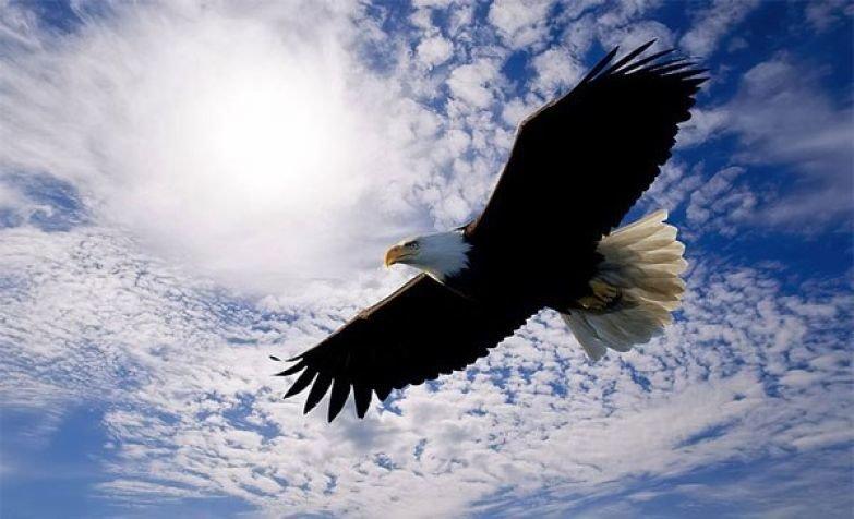 День картинки, открытка полет орла