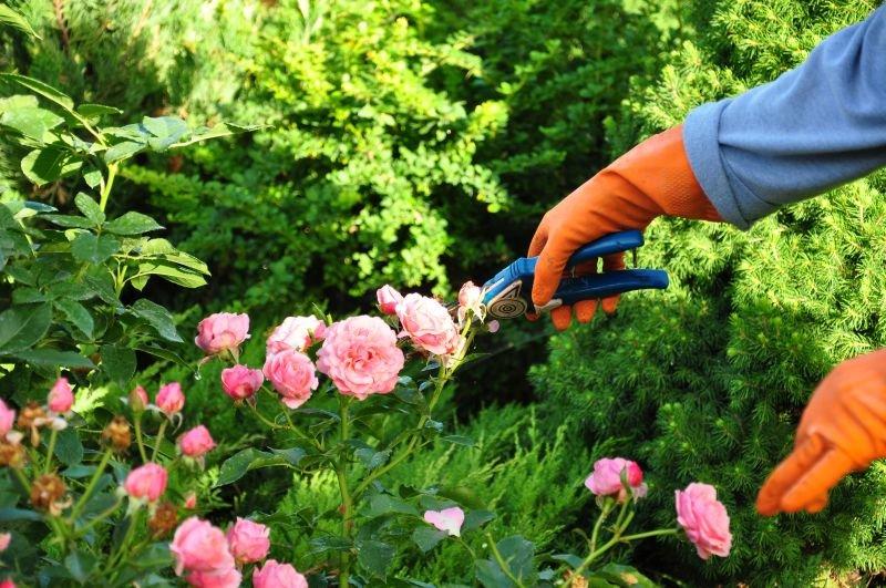 Как ухаживать за своим садом Wondergarden.ru/уход-за-садом/?