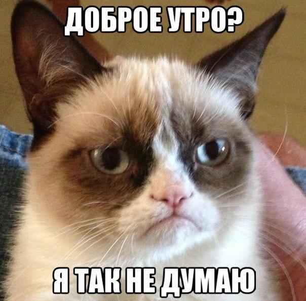 12 лучших интернет-мемов 2013-2014 года / фото 2016