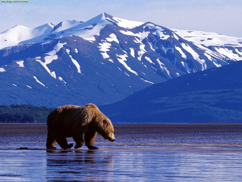 Фото и интересные факты об Аляске