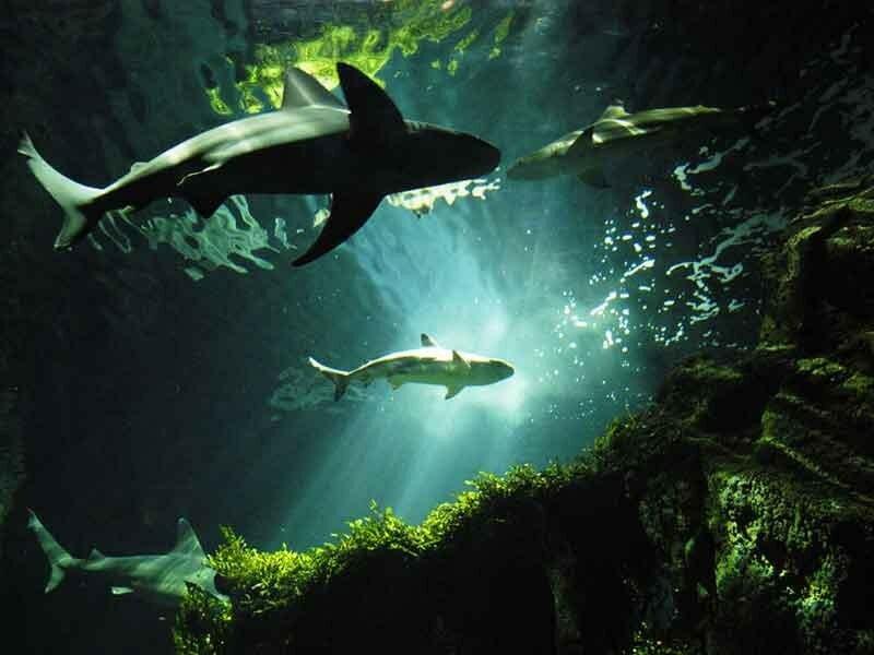 Фото подводного мира акул