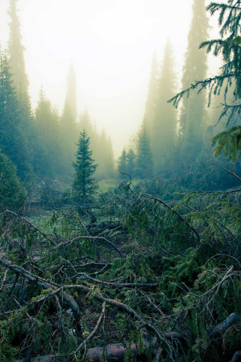 Фото природы. Лес. | Блог Сергея Коваленко