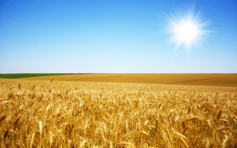 Картинки Лето » Природа »   Картинки 24 - скачать картинки бесплатно