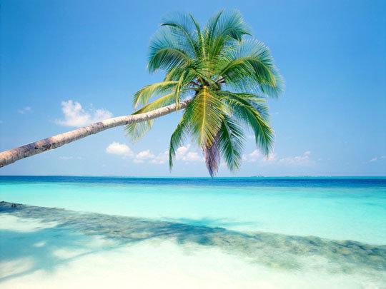 Красивое лето, солнце фото, картинки, видео