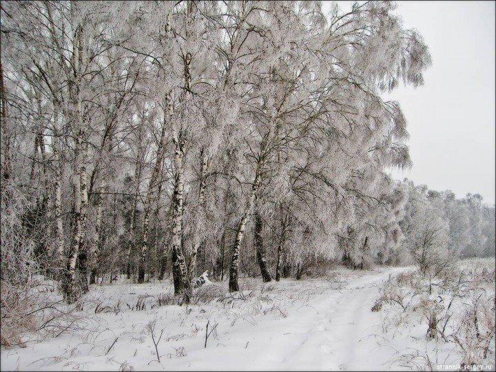 Редкое явление природы - после ледяного дождя