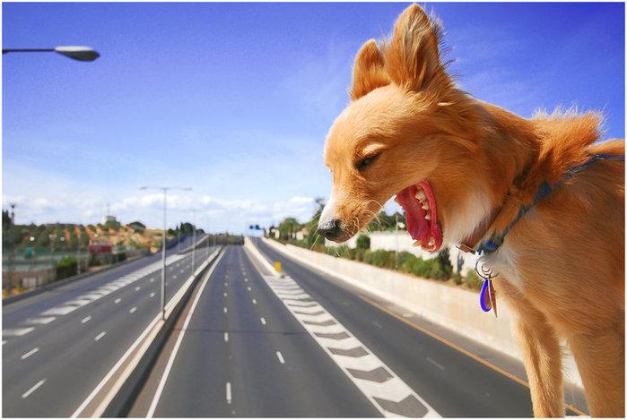 животные фото | Записи с меткой животные фото | Счастье - это не жизнь без забот и печалей, счастье - это состояние души! : LiveInternet - Российский Сервис Онлайн-Дневников