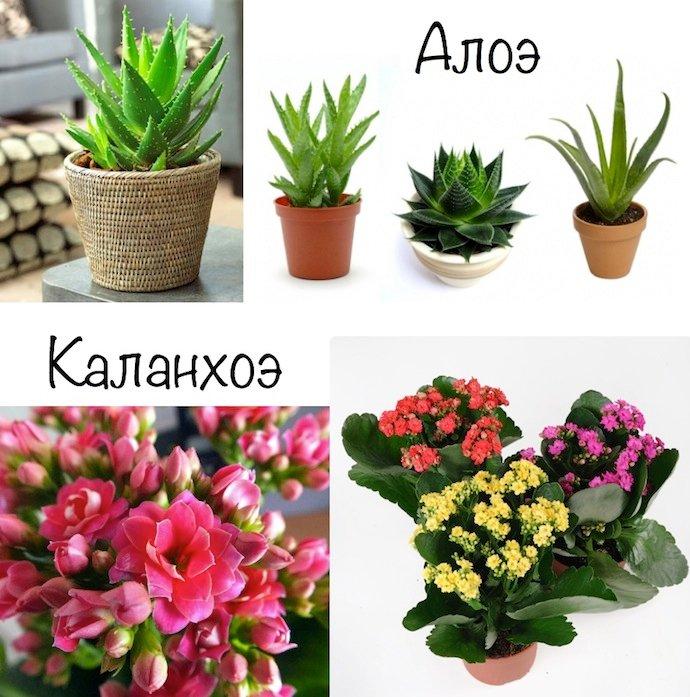 Самые неприхотливые растения