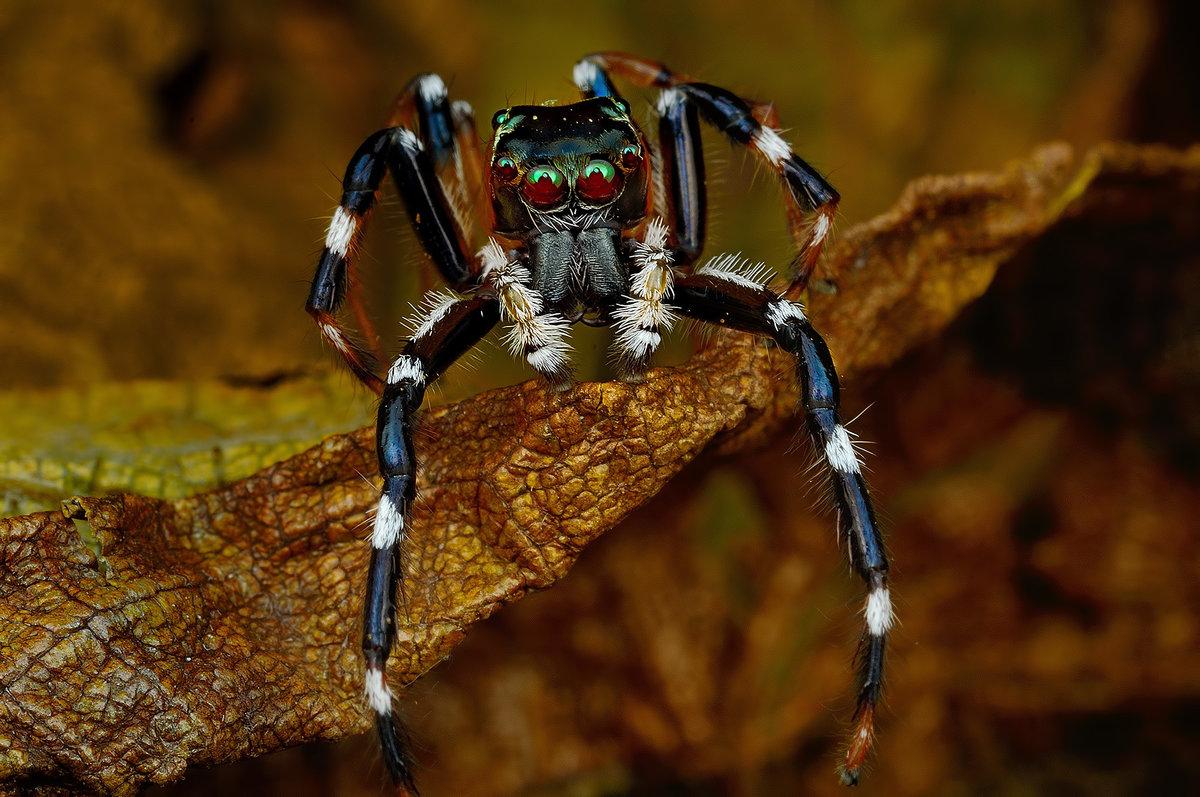 если картинки экзотический паук стих пожелание прозе