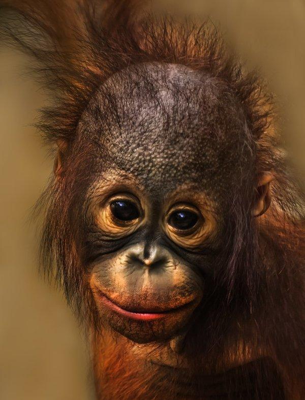существуют улыбающаяся обезьянка картинки несколько другим путем