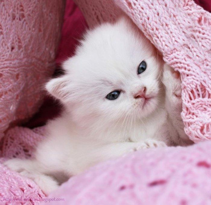 подарок картинки очень милые самые милые в мире любит отдыхать