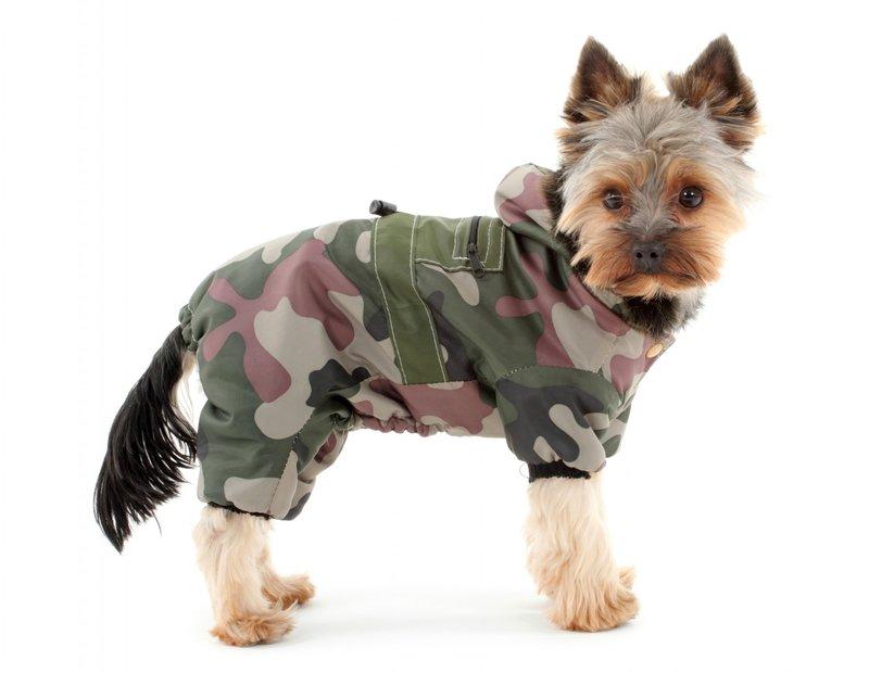 Собаки Йоркширский терьер Униформа Животные