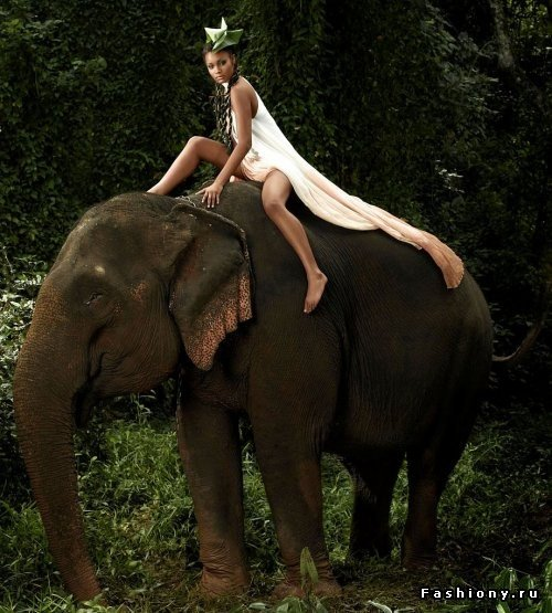 Male elephant girl sax videos free virginia hill