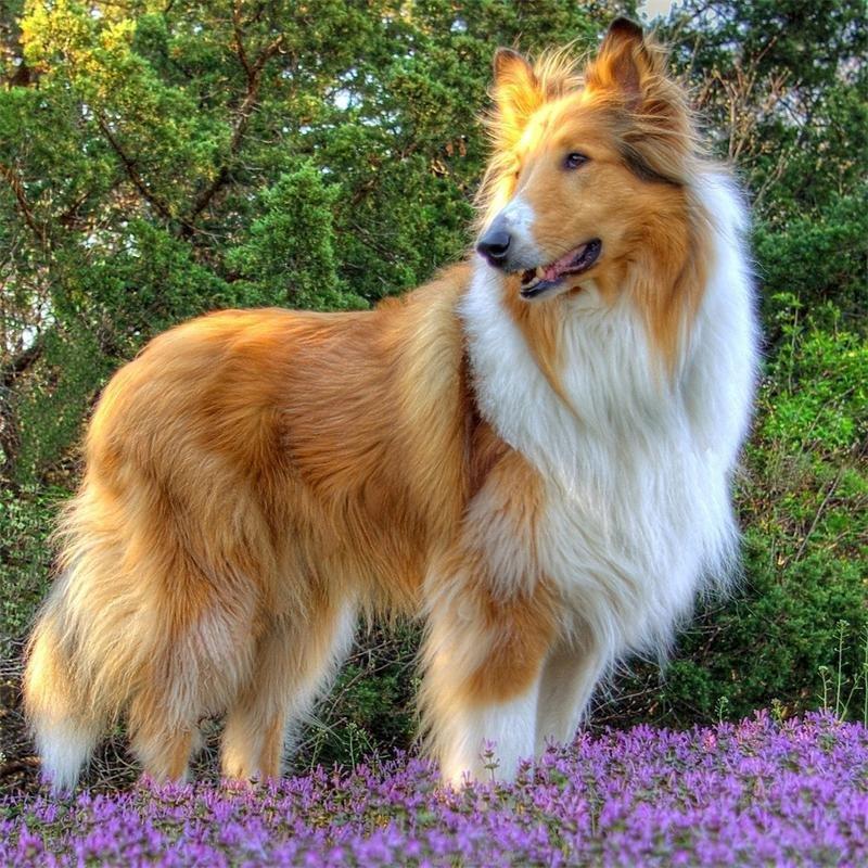 Фото собак красивых пород