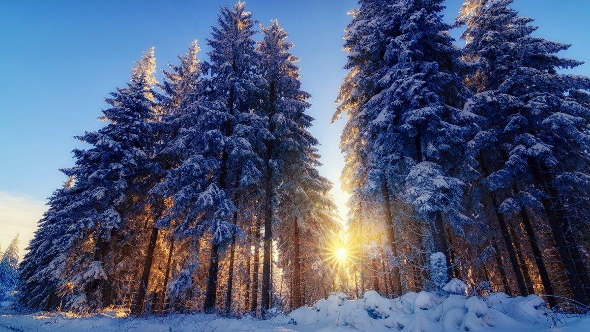 Картинки зимнего леса большие