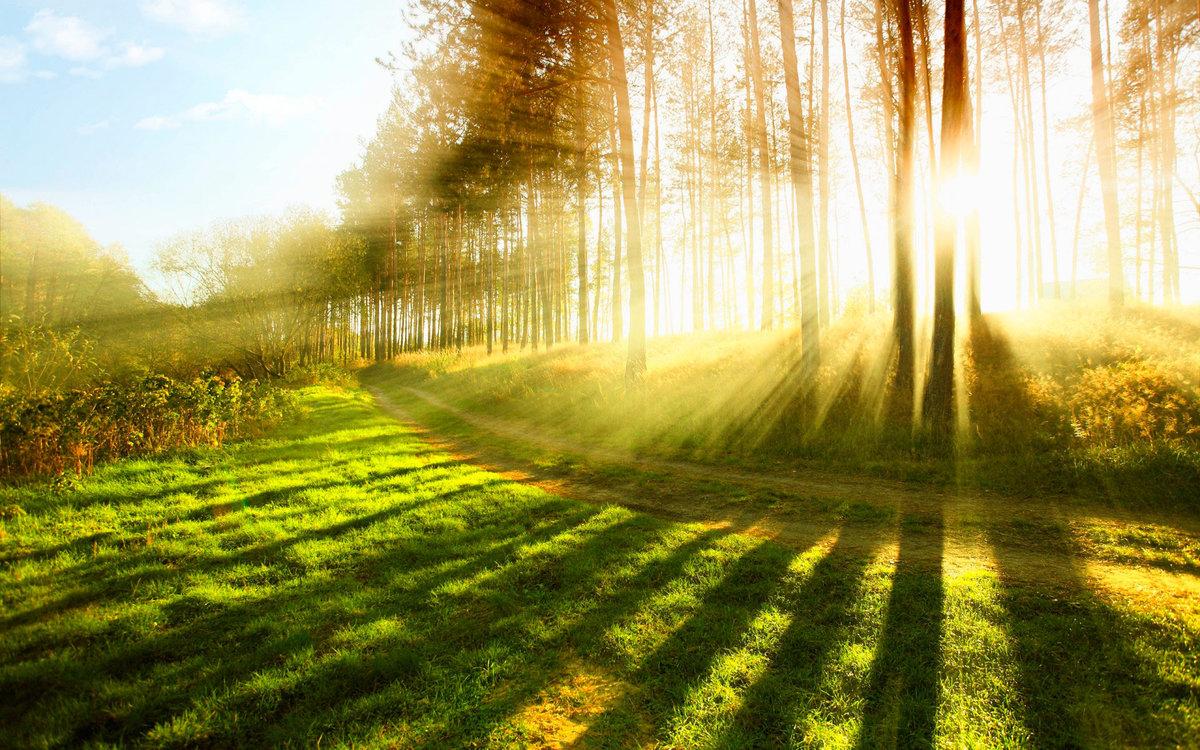 Солнце в лесу картинки