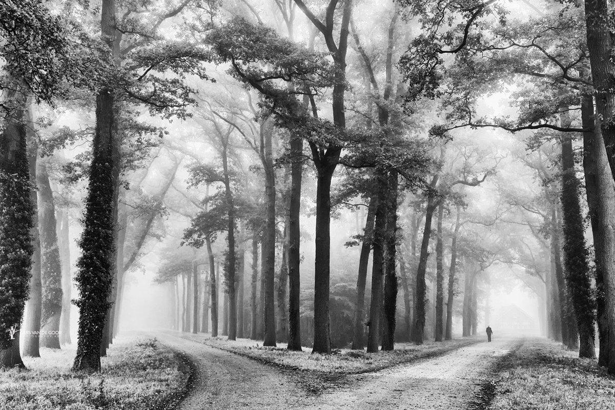 красивые черно белые пейзажи картинки того