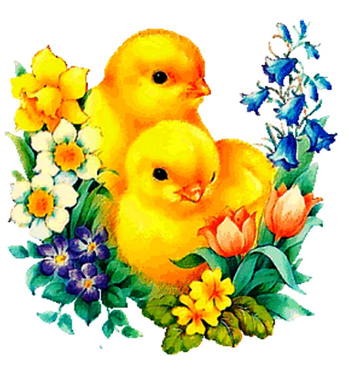 Картинки на тему цыплята