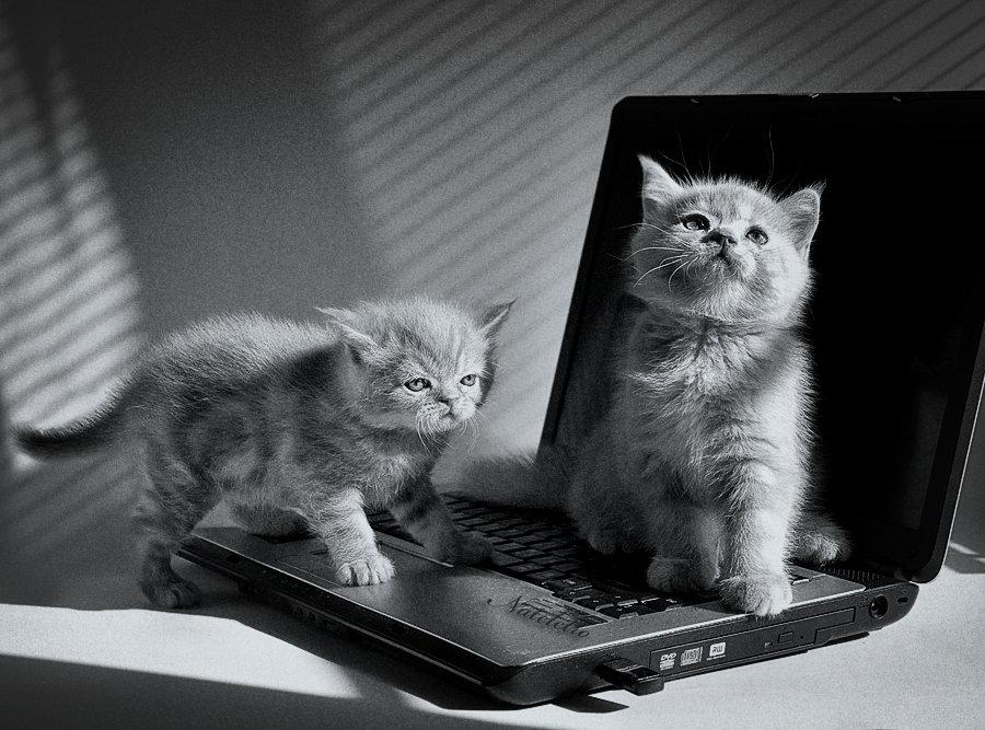 Картинки котят на ноутбук, картинки картинки кузнечика