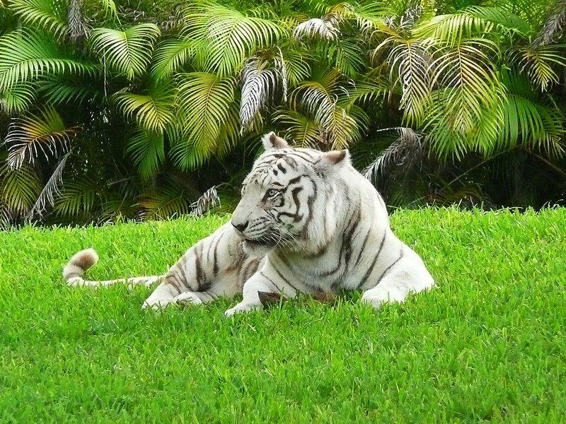 Зоопарк Майами Метро