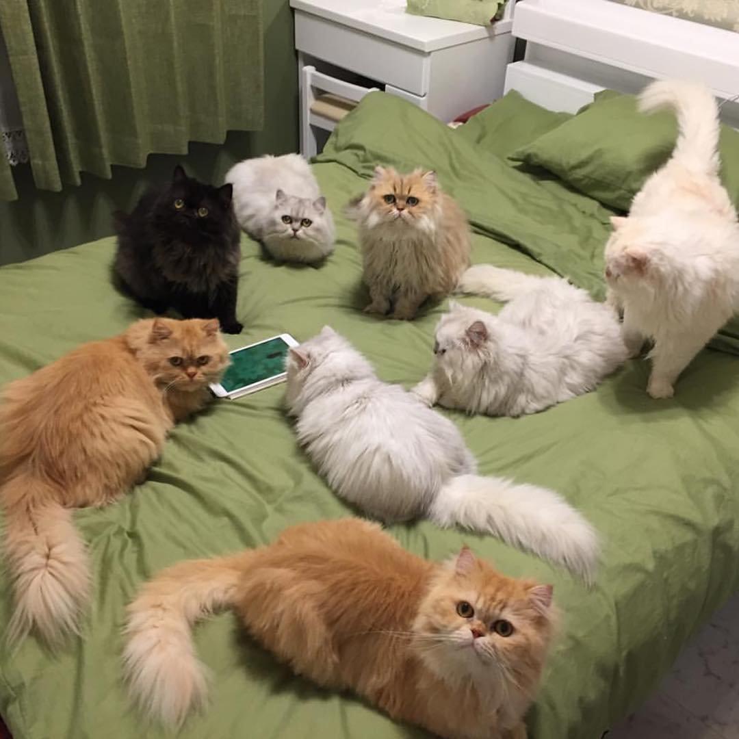 Смешной, смешные картинки кошек онлайн поднимающие настроение онлайн