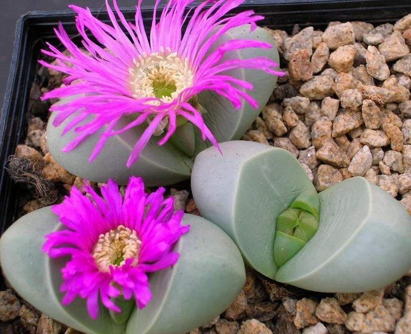 Цветы, цветы камни цена