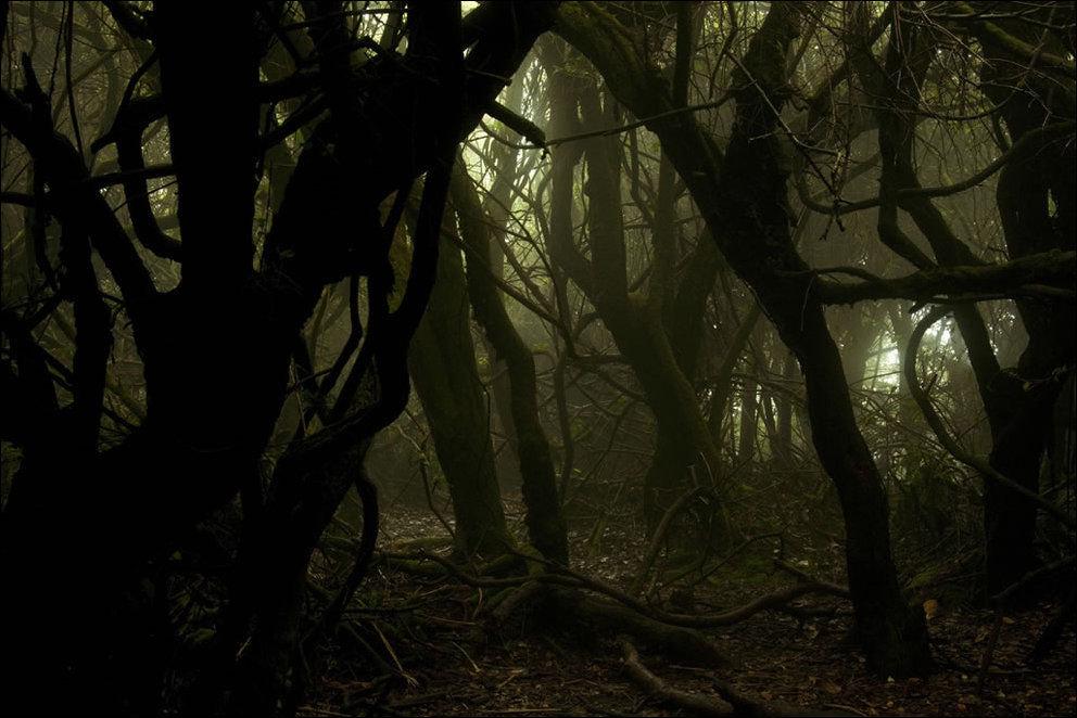 В темном дремучем лесу я карамелю мою сосу