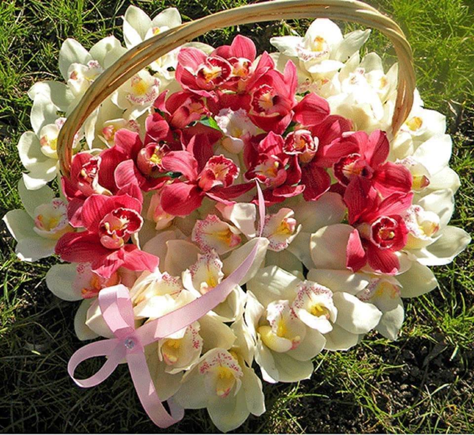 Картинки букеты орхидеи