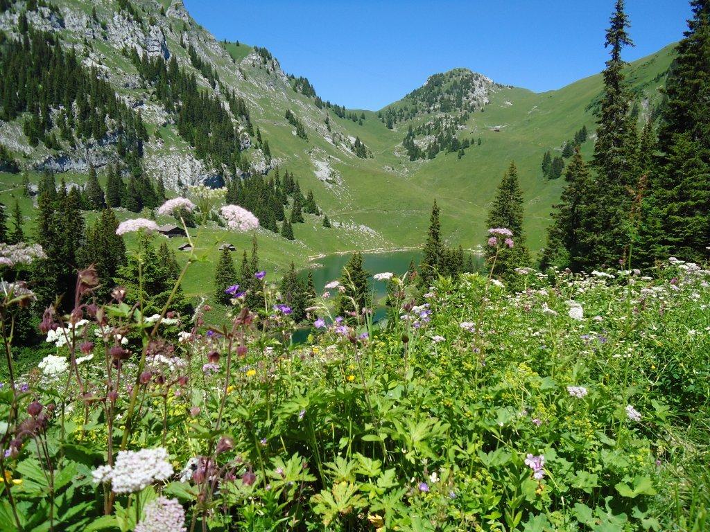 фото альпийского луга любой подушке можете