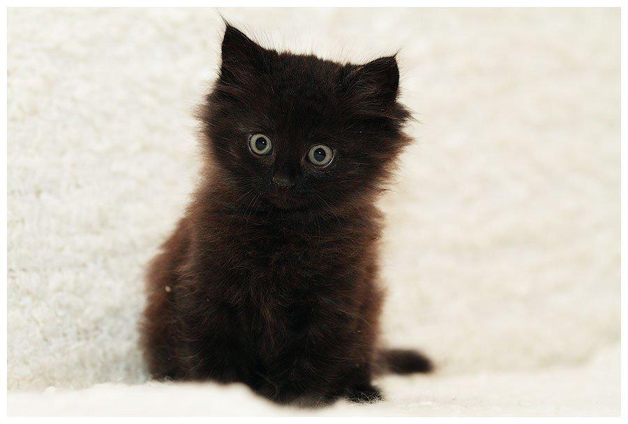 видео, фото черного пушистого котенка очень рада, что