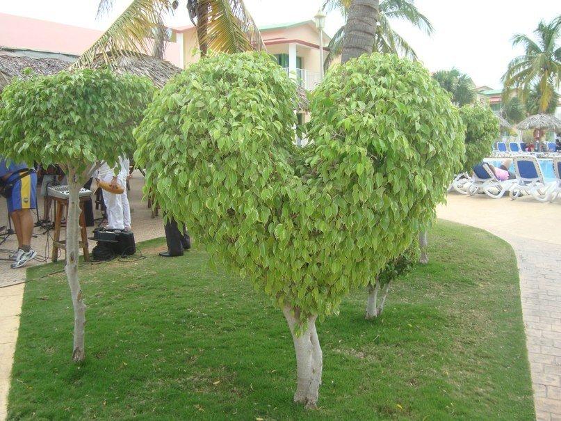 может фото и названия деревьев кубы пикантные голые селфи
