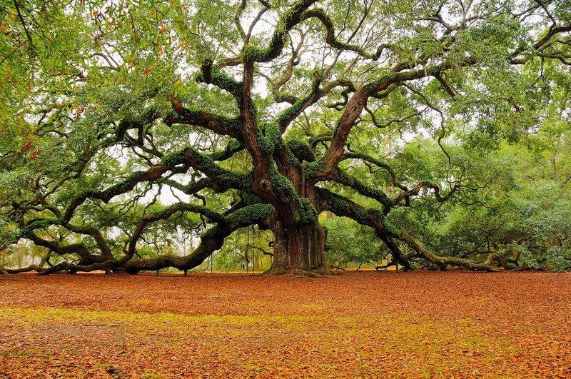 Как красива наша природа. Способность видеть и чувствовать  прекрасное в природе, в её необычайности, в её превосходстве это некий дар, присущий всякому человеку. Чтобы понять это, необходимо просто остановится, отрешится от суеты, и посмотреть чуть внимательнее вокруг. А если  остановиться то можно заметишь, как медленно и виртуозно падают листья с деревьев, пробуждая в...