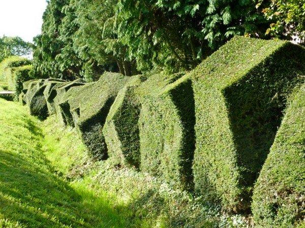 Красивые и креативные живые изгороди