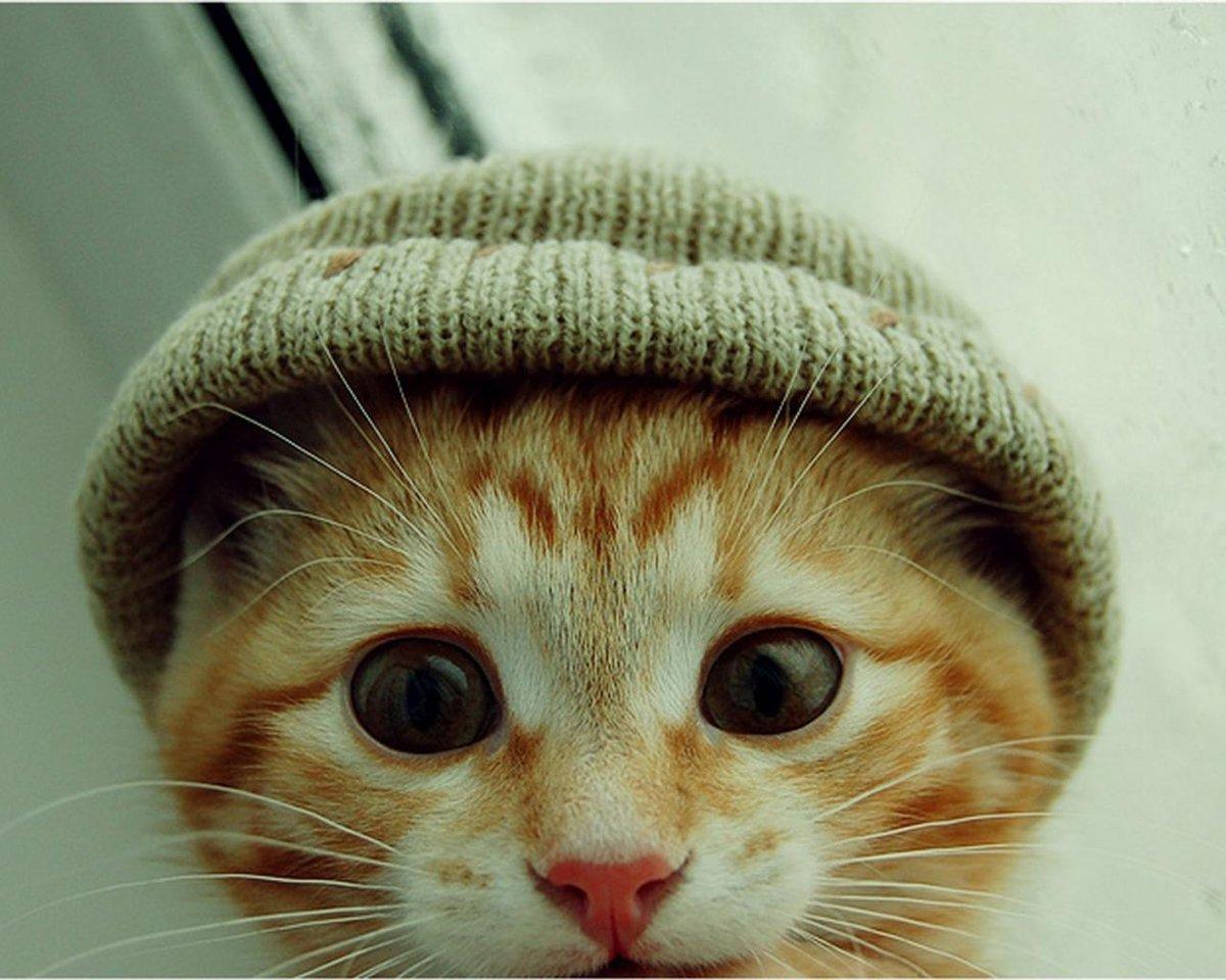 Смешные картинки кошек в очках, объемной