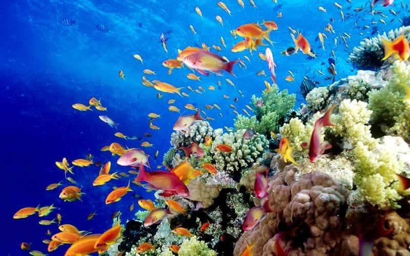 Национальный морской парк Большой Барьерный риф расположен у северо-восточного побережья Австралии, в Коралловом море. Он был создан для защиты от разрушения самого большого скопления кораллов в мире, находящегося именно здесь, и охраны экзотических морских видов животных.