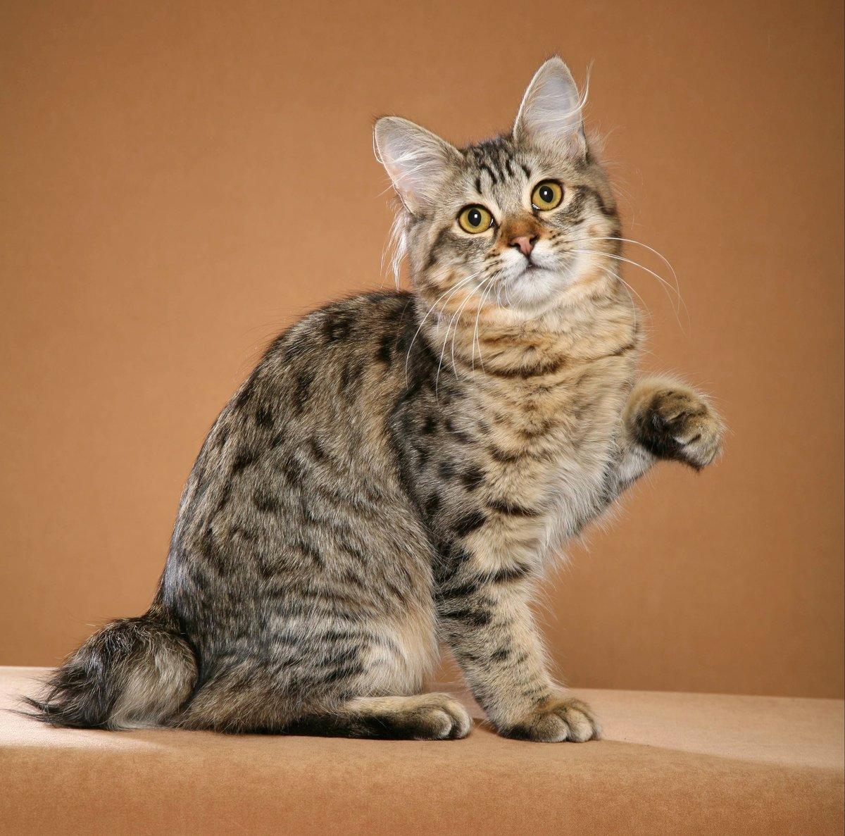 Дарине открытки, кошки фото картинки название
