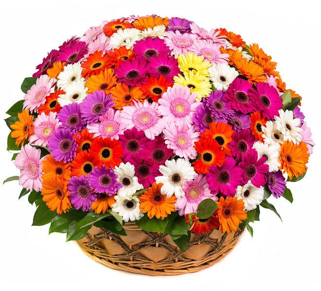 Невесты заказ, красивый букет разных цветов картинки