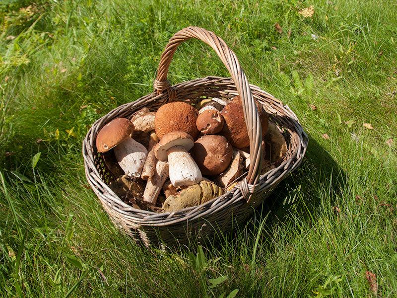 Картинки с корзинами грибов
