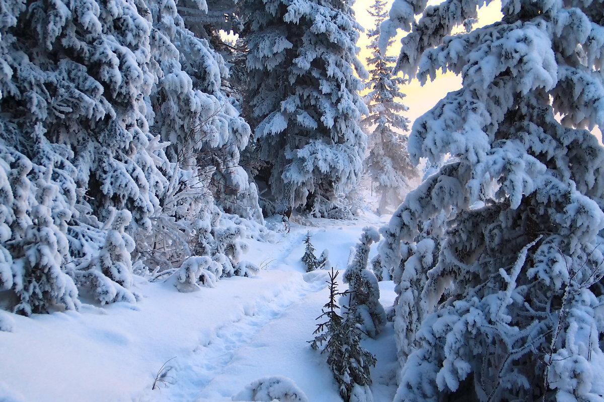 Красивые, картинка зима в лесу