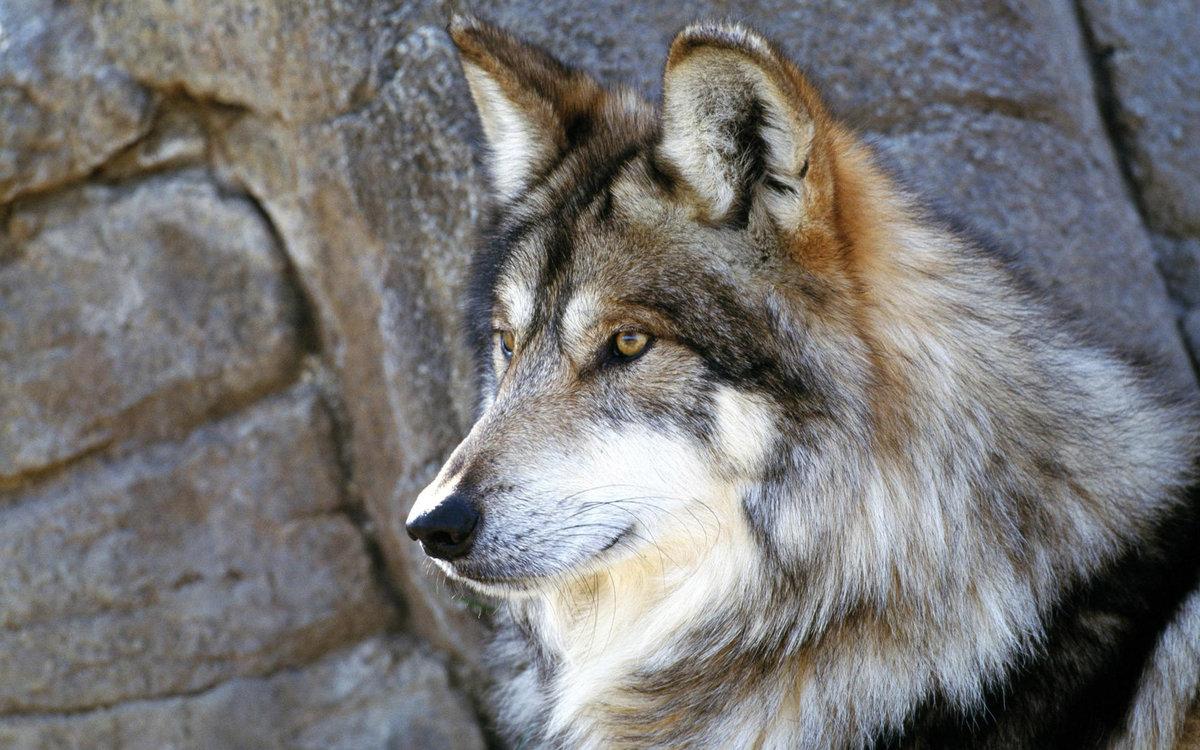 Що таке фото, Фото Wikimedia Foundation 13 фотография