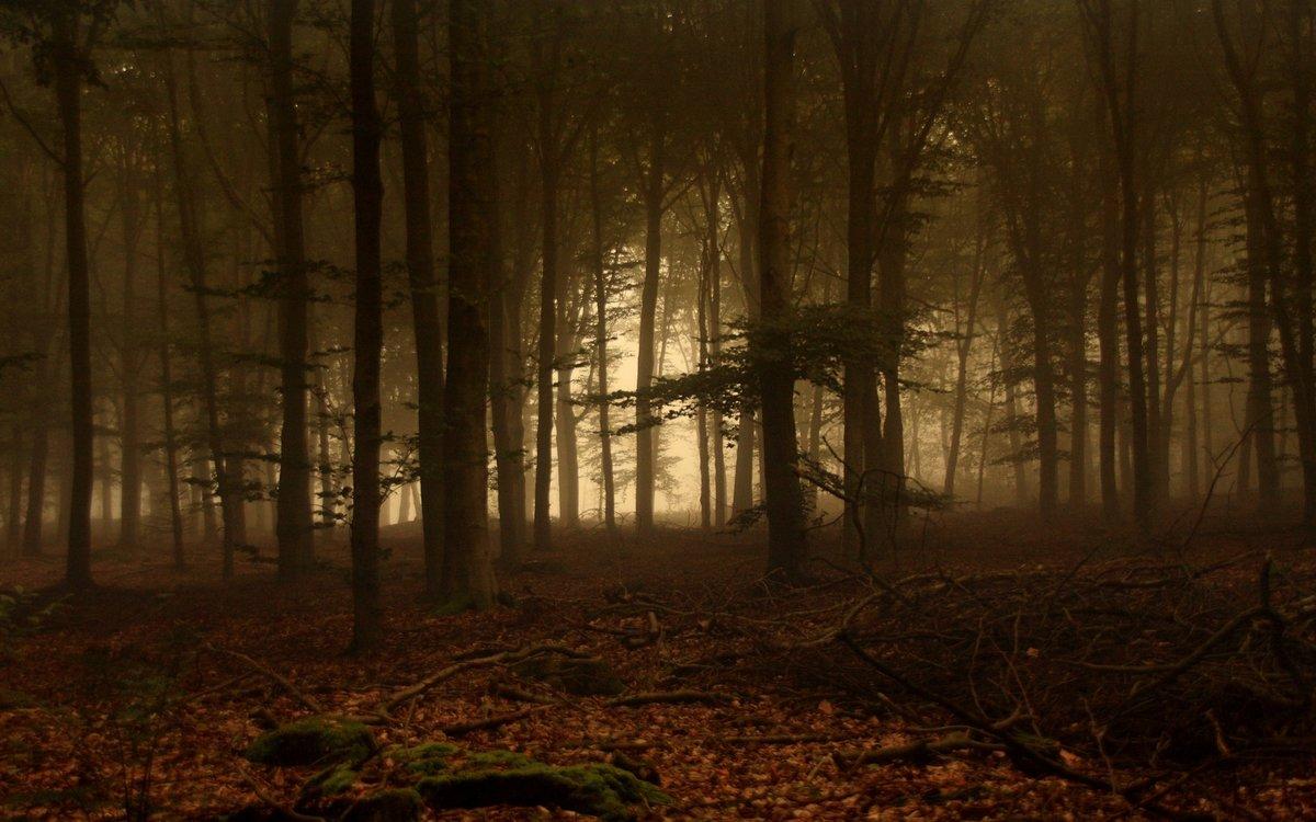 карамелю лесу сосу я в мою дремучем темном