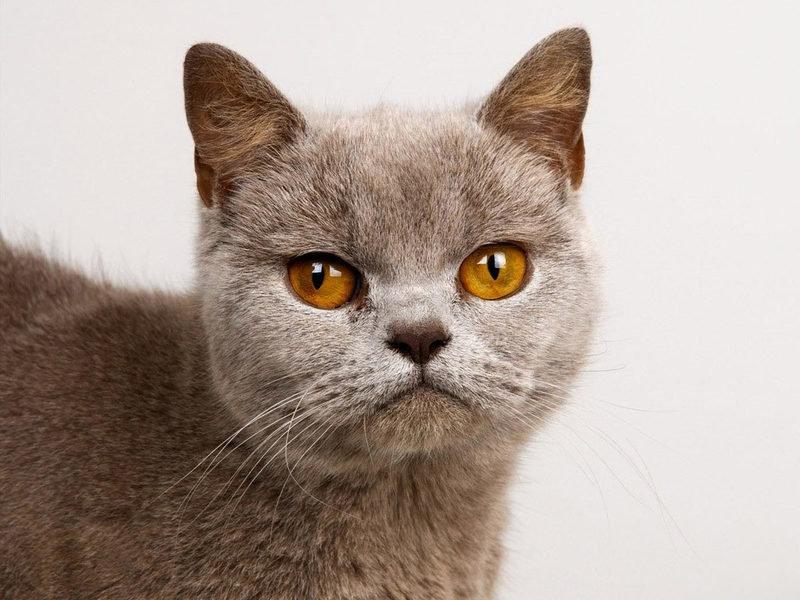 Содержание и уход котов