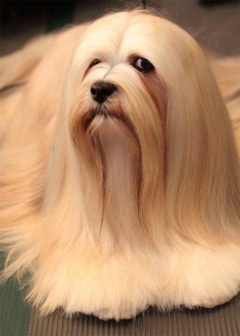 собаки породистые. фото