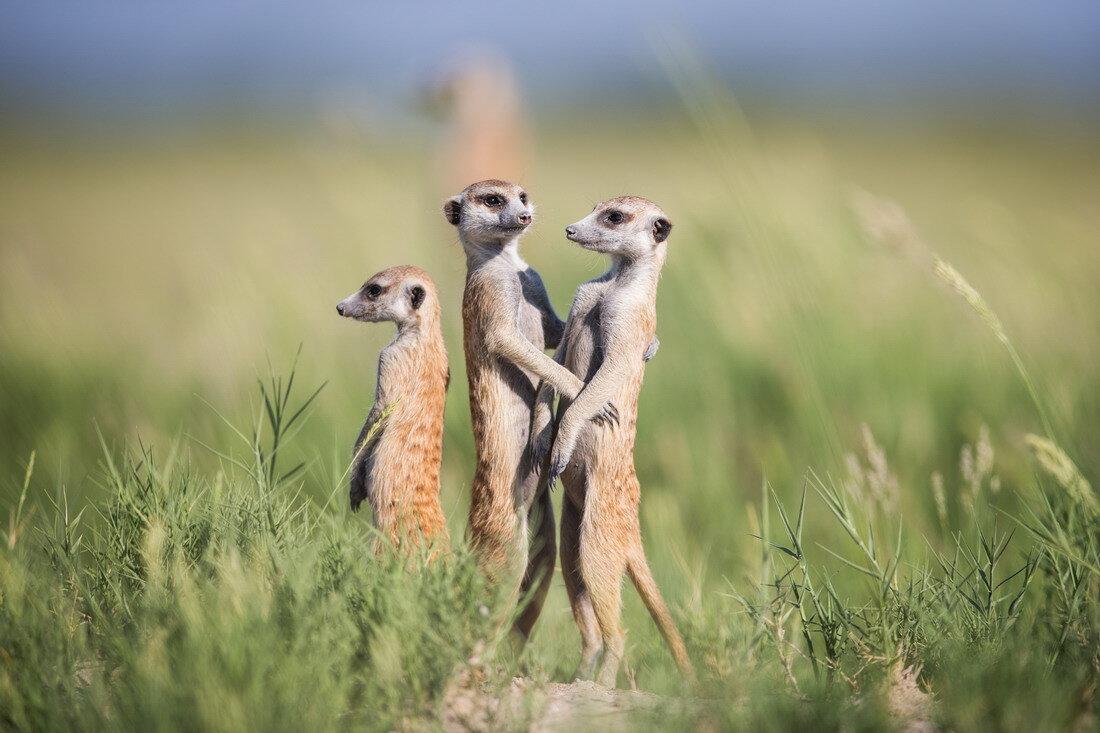 картинки где три животных смешные считается символом